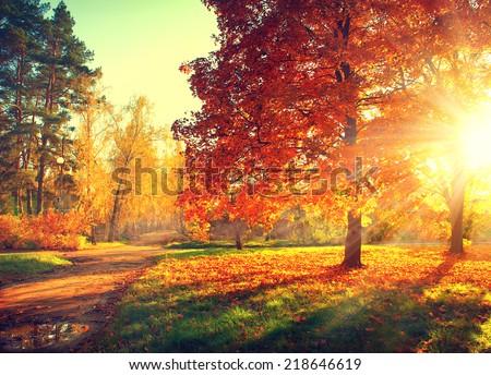 Autumn. Fall. Autumnal Park. Autumn Trees and Leaves in sun light. Autumn scene - stock photo