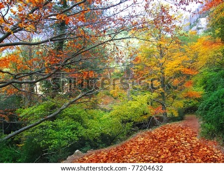 autumn fall beech forest track yellow golden leaves scenics - stock photo