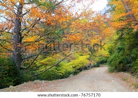 autumn fall colorful golden yellow leaves beech forest trees