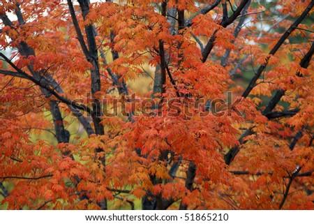 Autumn fall foliage scene in New Hampshire - stock photo