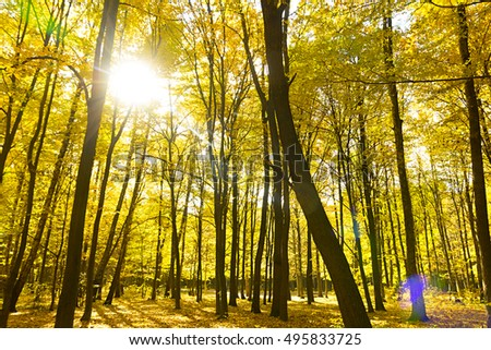 Autumn fall forest with pathway in beautiful orange yellow and red colors. seasonal autumn nature forest fall themes