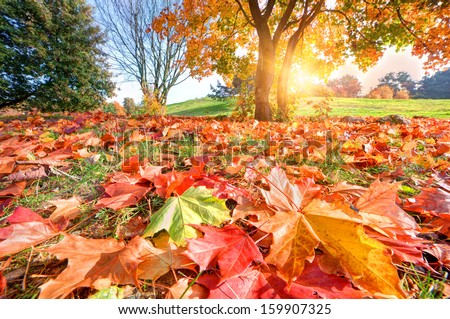 Autumn, fall landscape in park. Colorful leaves, sunny blue sky. - stock photo