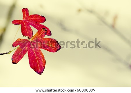 Autumn fall leaves - stock photo