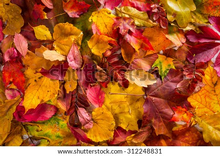 Autumn fall leaves background - stock photo