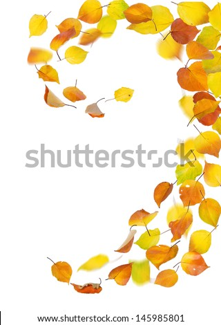 Autumn falling leaves on white background. - stock photo