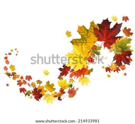 Autumn falling leaves on white background - stock photo