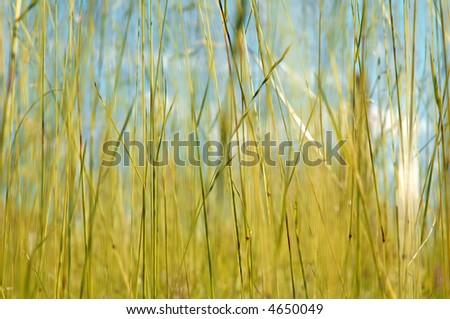 autumn field background - stock photo