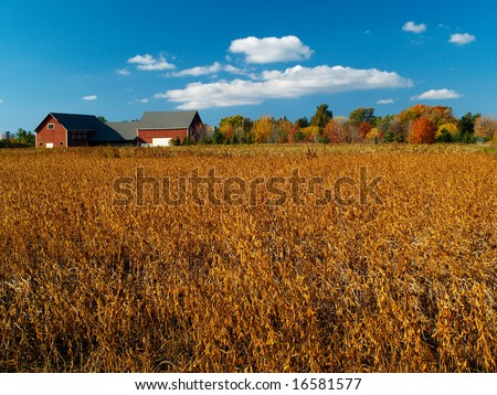 Autumn field with colorful trees and blue cloudy sky - stock photo