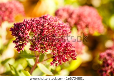 Autumn flower close-up shot in the woods - stock photo