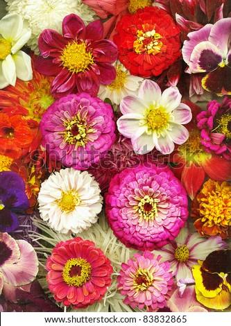 Autumn flowers - stock photo