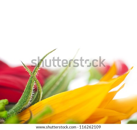 Autumn flowers, blured and colored - stock photo