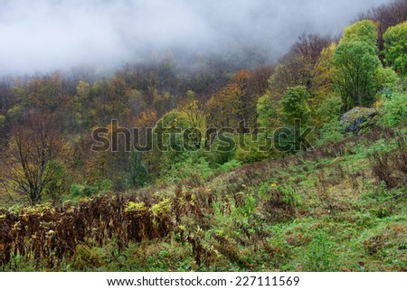 Autumn foggy forest landscape