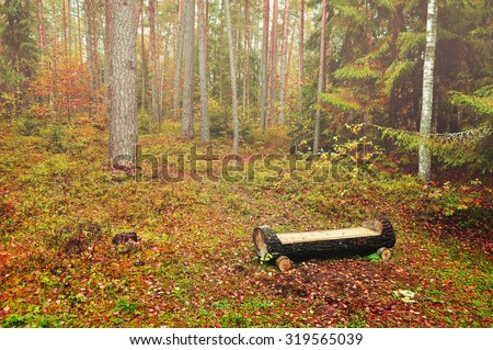 Autumn foggy landscape with wooden bench of log in the forest, soft focus processing