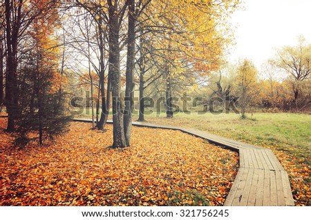 Autumn foggy landscape - wooden walkway  among the yellowed trees