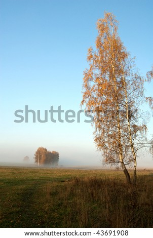 autumn foggy morning