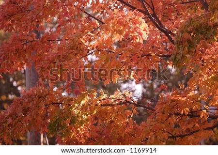 Autumn Foliage - stock photo