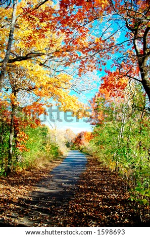 Autumn foliage. - stock photo