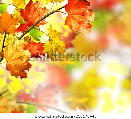 autumn foliage - stock photo