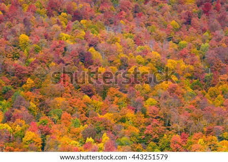 Autumn foliage abstract background in New England area. - stock photo