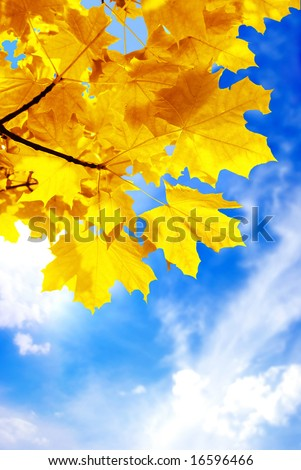 Autumn foliage against the sky - stock photo
