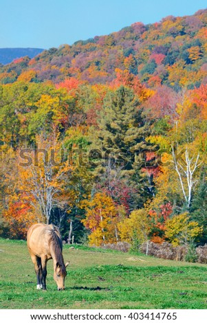 Autumn foliage and horse in New England area. - stock photo