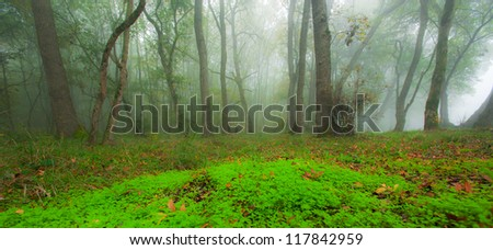 Autumn foliage and morning mist in the forest in October