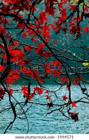 Autumn foliage around Stone Mountain. More with keyword group9c