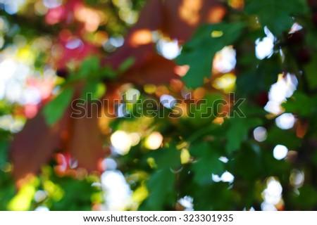 Autumn foliage bokeh background - stock photo