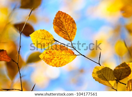 Autumn foliage close-up against blue sky - stock photo