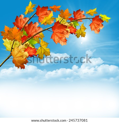 Autumn foliage. Golden Autumn. - stock photo