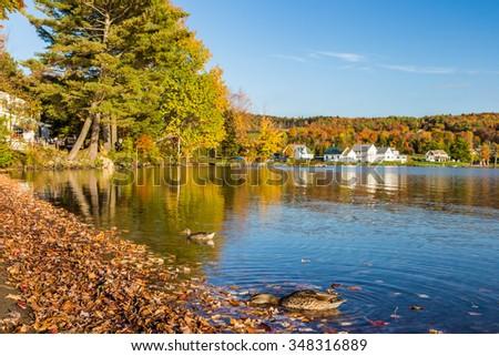 Autumn foliage in Elmore state park in Vermont. - stock photo