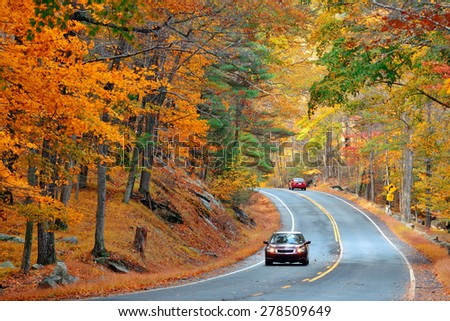 Autumn foliage in forest with road. - stock photo