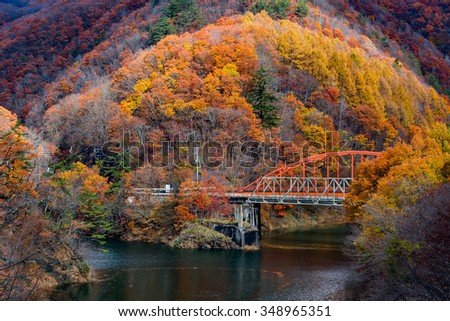 Autumn foliage in Japan.