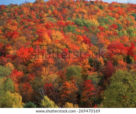 Autumn foliage in Vermont - stock photo