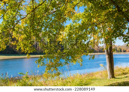 Autumn foliage, maple tree branches  against lake and sky. Sunny day in park. - stock photo