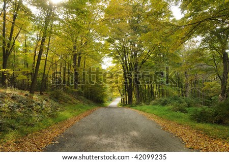 Autumn foliage on a country road. - stock photo