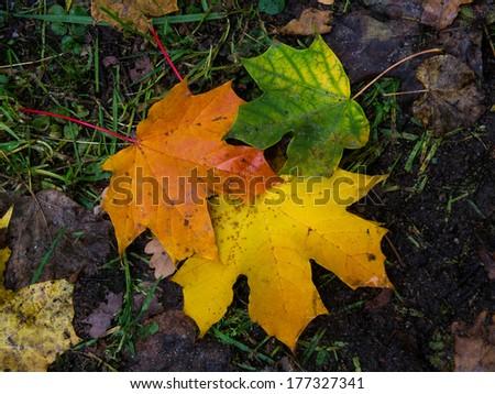 Autumn foliage on earthy background  - stock photo