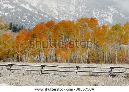 Autumn Foliage with a fresh coat of Snow - stock photo