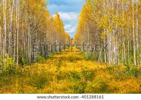 Autumn forest. - stock photo