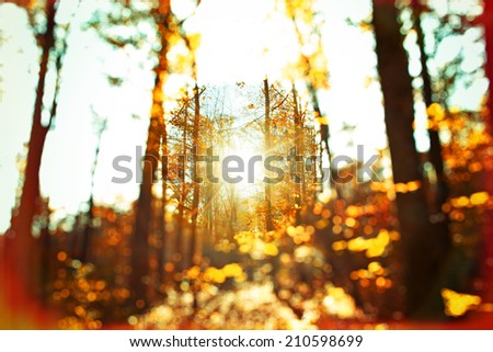 Autumn forest - abstract photo with selective focus - stock photo