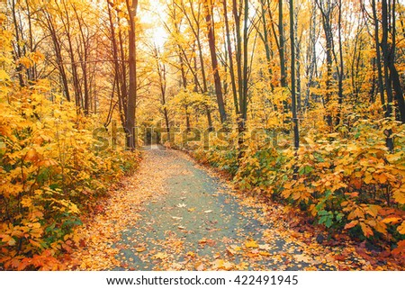Autumn forest and a footpath - stock photo