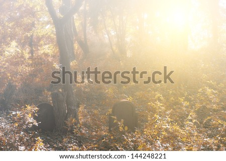 Autumn forest and gravestone - stock photo