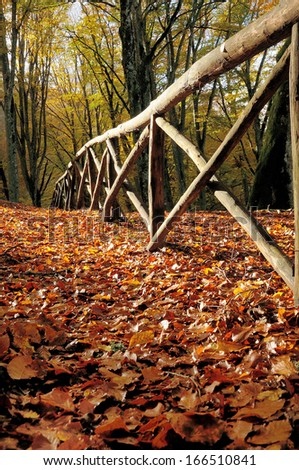 autumn forest and old fance - stock photo