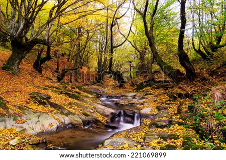 Autumn forest and small creek.Creepy trees - stock photo