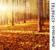 Autumn forest at sunset. - stock photo