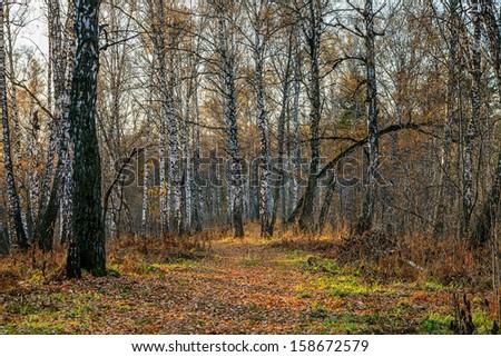 Autumn forest at sunset - stock photo