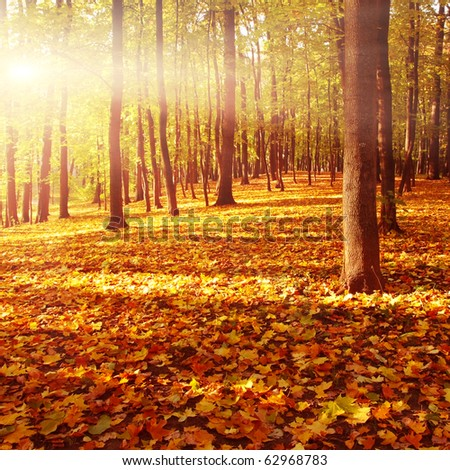 Autumn forest at sunset. - stock photo
