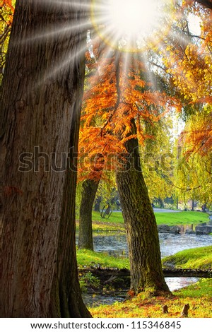 Autumn forest at sunset. Sunset in the woods - stock photo