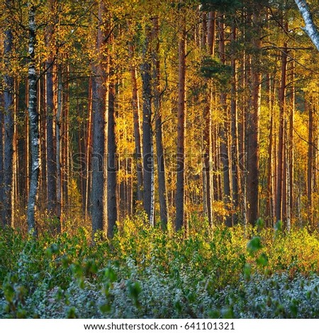 Autumn forest at the sunrise