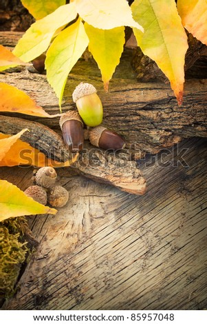 Autumn forest background. Acorns on tree bark and autumn colorful leaves. with copyspace - stock photo